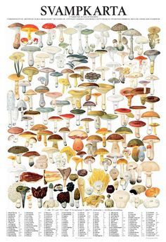 Important to have and lots of fun to pick mushrooms in Sweden. Learn Swedish, Mushroom Hunting, Science And Nature, Botanical Illustration, Botanical Prints, Natural History, Flora, Stuffed Mushrooms, Birds