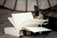 cat + book = happiness