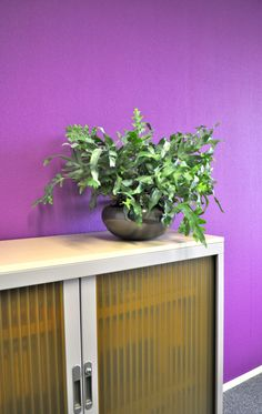 paars kantoor met groene plant: groen reduceert stress | purple office with green plants for stress reduction
