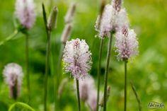 Pink & wild flower  #nature #flower #Switzerland
