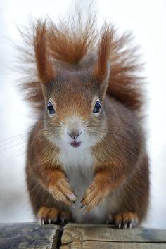 Love for Earth - http://www.facebook.com/pages/Pour-la-protection-des-animaux-et-de-la-nature/120423378016370