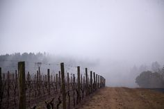 Winter wine tasting near Portland is easy to find with help from the wineries and vineyards of the northern Willamette Valley. Come try our Pinot Noirs! Oregon Wine Country, Country Roads, Willamette Valley, Washington County, Winter Light, Wine Tasting, Mists, Vineyard, Wineries