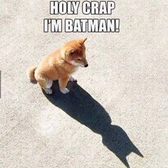 Unless you can be batman. Then be [BATMAN] Funny Animal Jokes, Really Funny Memes, Cute Funny Animals, Stupid Funny Memes, Funny Animal Pictures, Cute Baby Animals, Funny Cute, Funny Dogs, Cute Dogs