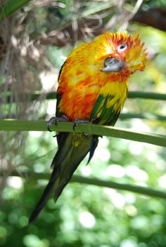 thecoloursofthesea:      A photograph of mine; of my beautiful bird Solis after a bath <3    REBLOG THIS BAABBES xoxo