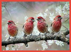 Kinds Of Birds, All Birds, Little Birds, Love Birds, Pretty Birds, Beautiful Birds, Beautiful Things, Beautiful Pictures, Funny Animals