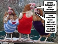 Fashion conscious chickens.