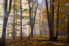Wald #107 by HeikoGerlicher on DeviantArt