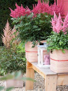 So perennials thrive in the pot - the top 20 varieties , Summer House Garden, Dream Garden, Garden Care, Garden Beds, Container Plants, Container Gardening, Small Outdoor Spaces, Indoor Flowers, Garden Living