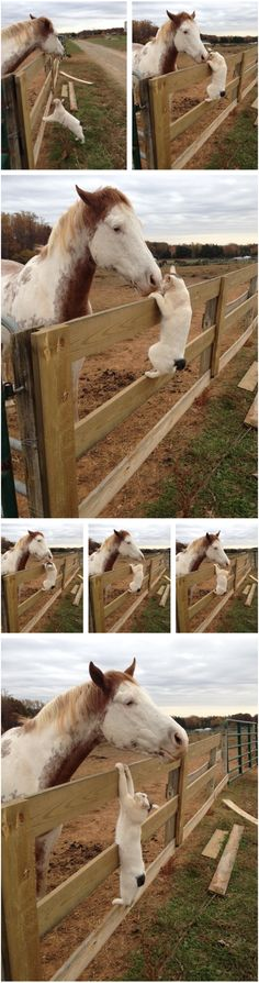 """Poster: """"So one of our barn cats LOVES visiting with the horses, but he got a little more than he bargained for today. I love the visible transition from 'Hello friend!' to 'Woah there buddy' to 'Oh my God I didn't sign up for this' """""""