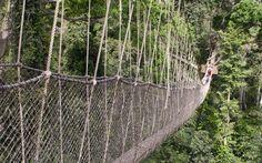Canopy Walk, Ghana - World's Scariest Bridges Scary Bridges, Royal Gorge, Lake Pontchartrain, Rope Bridge, Mackinac Bridge, Fear Of Flying, Forest Floor, Suspension Bridge, Wood