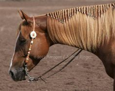 western horse hairstyles - Google Search