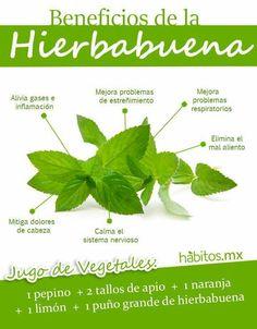 Infografia beneficios hierbabuena