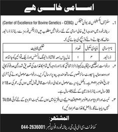 Driver Jobs in Renala Khurd Okara 2021