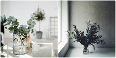 Eucalyptus plante Quartier CréatiV plante tendance 2015