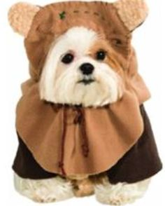 Tips for Getting Your Dog Halloween Ready, by Rebecca Sanchez, The Pet Lifestyle Guru at MattieDog