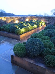 Oak raised beds and Box Ball planting with John Cullen outdoor lighting- Llama Architects