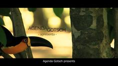 Agenda Gotsch films on Large Scale Tropical (Sintropic) Agroforestry in Brazil Aquaponics Plants, Hydroponics System, Growing Grapes, Growing Plants, 55 Gallon Drum, Sustainable Farming, Sustainability, How To Treat Acne, Proposal
