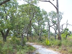 Nature trail at St. Joseph Peninsula State Park, Florida