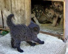 子犬vs子猫