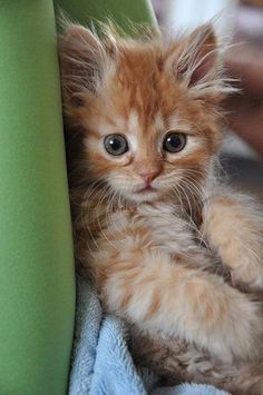 .every time  I see a fluffy orange tabby, I think of my very first kitty when I was 5
