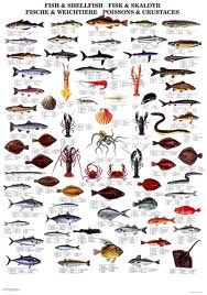 nz commercial fishing - Google Search