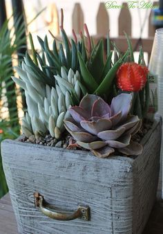 Create a succulent garden in a thrift store container, container gardening, flowers, gardening, repurposing upcycling, succulents