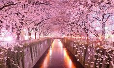 Sakura-Tunnel
