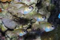 Follow these reefkeeping tips to increase your likelihood of long-term nano reef aquarium success.