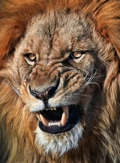 The power of lion.