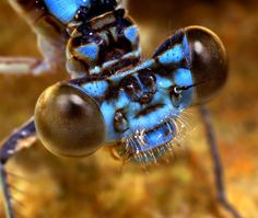 Damselfly eyes. Follow the the link for an amazing photoblog of a variety of insect and arachnid eyes.