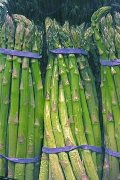 asparagus is a perennial.  you don't harvest the first year unless you want to kill the plant.  this is the UGA article.