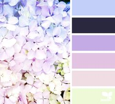 { petaled spectrum } image via: @traceybolton