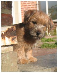 terrier puppy!