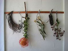 Australian-based artist Tiel Seivl-Keever's collection of local foliage, from The Design Files.