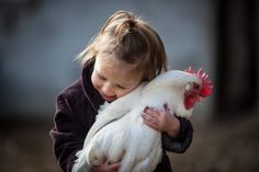 One question we often get asked by people planning for their first flock of backyard chickens is this: how do I get friendly birds? How do y...