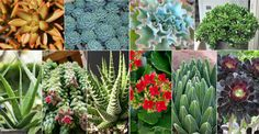 Succulents are not only easy to care for but are also suitable for growing in containers and are stylish and cool to look at...