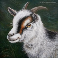 """""""Sheila"""" Pygmy Goat ~ original painting by © Karrel Christopher ~ oil on canvas~ size 10"""" x 10"""" ~ available for purchase ~ Farm Animals ~ Vegan ART ~ Compassion Education ~ Animal Rights ~ Animal Portraits ~ Goat Paintings ~ http://www.karrelchristopher.com/animal-portraits.html"""