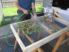 The Farm, Edible Garden, Vegetable Garden, Organic Gardening, Gardening Tips, Raised Garden Bed Plans, Raised Beds, Farm Stand, Farm Gardens