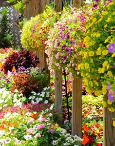 flowers on fence posts