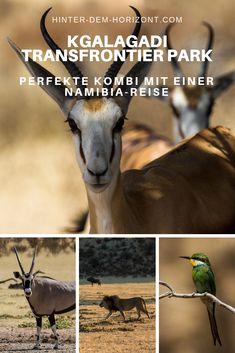 Kgalagadi Transfrontier Park? Nie gehört? Das ist ein wildreicher Park in Südafrika, direkt hinter der Grenze von Namibia. Die perfekte Ergänzung für einen Namibia Roadtrip: Safari in Südafrika. Uganda, Safari, Namibia, Roadtrip, Places To Go, Bucket, Camping, Travel, Tanzania