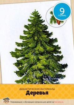 Картинки дерева (для детей) актуальны в любом возрасте: узнать полезные факты о зеленых друзьях интересно и малышам и школьникам. Скачайте красочный материална компьютер и распечатайте картинки на цветном принтере. Используйте их как графическое сопровождение к рассказам о видах и функциях деревьев. Обязательно просите ребенка пересказать то, что он услышал — ...