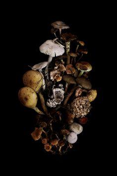 mushrooms | STILL  (mary jo hoffman)