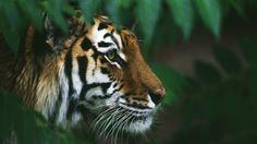 Wildlife Finder