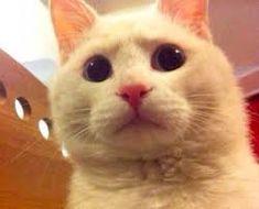 Cat Aesthetic, Otters, Wordpress Theme, Bunny, Cute, Animals, Death, Pets, Gatos