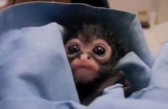 Someone Made the Cutest Funny Song for This Little Rescue Monkey (VIDEO)