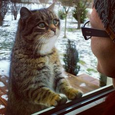 Cat it all – 90 фотографий