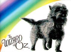 Toto Wizard of Oz | Wizard of Oz Toto Dog