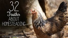 32 Truths About Homesteading -- the good, the bad and why it's worth it! #homesteading #chickens #localfood