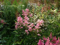 ZAHRADNICTVÍ TŘEBÍČ | Okrasné rostliny | Trvalky Colourful Garden, Plants, Color, Colour, Plant, Planets, Colors
