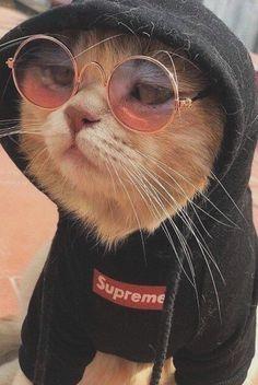Dj wali babu mera gana to chala do😉 - Outfits Für Teenager - Gatos Cute Baby Cats, Cute Cats And Kittens, Cute Funny Animals, Cute Baby Animals, Cool Cats, Kittens Cutest, Funny Cats, Cute Kitty, Sad Kitty